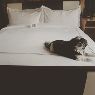 Isn't this my bed, mommie?